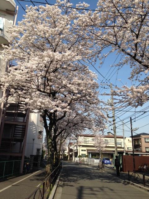 2014_sakura.png